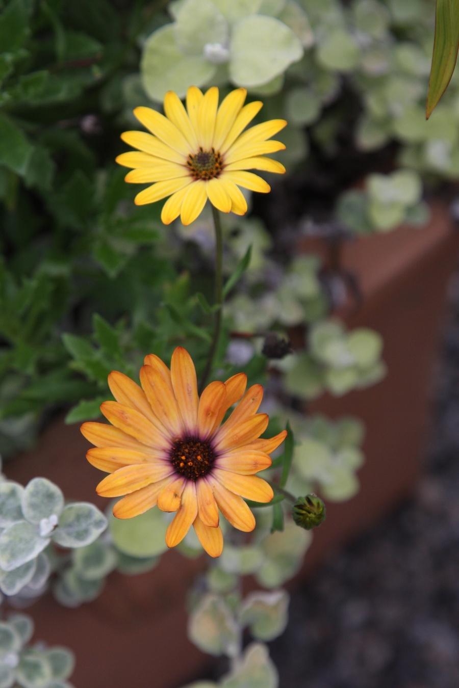 Fall_garden_color_15.full