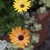Fall_garden_color_15.small