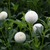 Dahlias_dahlia_tiny_treasure-1.small