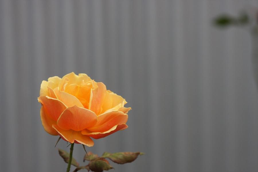 Fall_garden_color_29.full
