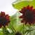 Sunflowers_3.small