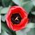 Tulips_tulipa_apeldoorn-3.small