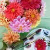 Dahlias_dahlia_watercolors.thumb