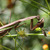 Mantis_3.small