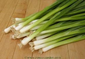 Onions_alium_cepa_aggregatum_group_parade-1.full