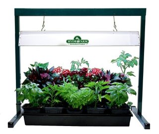 Grow Lights Allow Year Round Gardening Fun!
