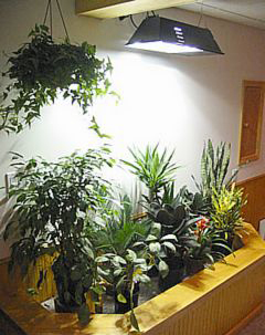 Metal-halide-grow-light.full