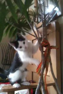 plant killing kitty