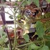 Img00094-20110216-1353.thumb