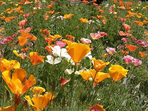 Poppy-rainbow-bonus2.full