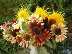 Sunflower-samba-vase.full