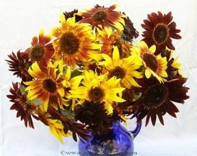 Sunflower-royal2.full