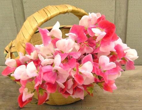 Sweetpea-paintedlady-basket.full
