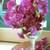 Sweetpea-zinfandel-vase1.small