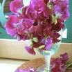 Sweetpea-zinfandel-vase1.thumb