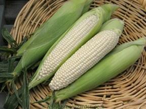Corn-sugar2.full