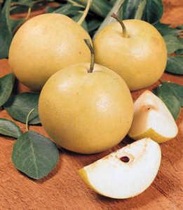 Pear Tree, Asian, 20th Century standard