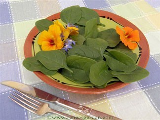 Spinach-catalina2.full