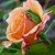 091308_3305-copyfrogtahitiansunsetweb.small