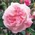 Antiques_rosa_fantin-latour-1.small