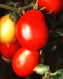 Tomato, Roma Principe Borghese (Italian Heirloom)