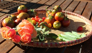 Fall Harvest of tomatoes, peas, strawberries and roses
