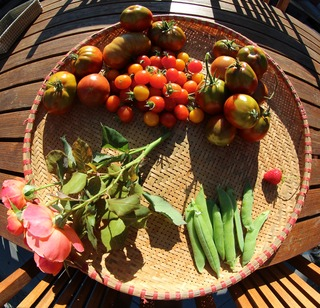 This morning's harvest from my Kitchen Garden