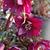 Helleborus_red_sapphire_2b.small