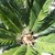 Palms_and_cycads_cycas_revoluta-2.small
