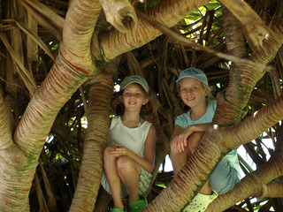 Kids in the banyon trees