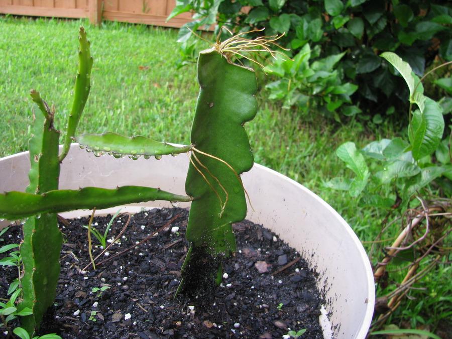 Succulent_sept._09.full