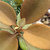 Cacti_and_succulents_kalanchoe_orgyalis-1.small