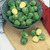 Brussels_sprouts_brassica_oleracea_long_island-1.small