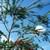 Tropicals_callistemon_viminalis-4.small