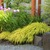Dragon%20house%20gardens%20%207107.small