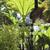 Perennials_gunnera_manicata-1.small