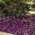 Petunias: Petunia x hybrida 'Easy Wave® Blue'