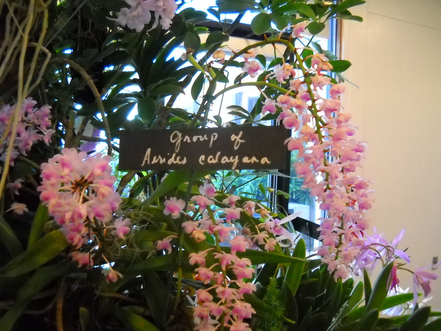 Orchid_show_101809_040.full