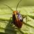 Bug3.small