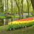 Day_2_keukenhof_14_.small