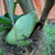 Staghorn_fern_2.small