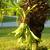 Tropicals: Platycerium bifurcatum