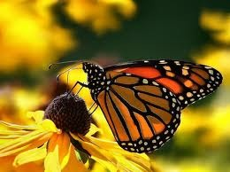Butterfly%20on%20flower.detail
