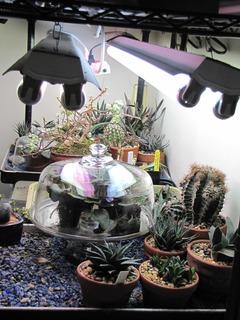 my indoor set up 2shoplites 4bulbs