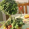 Tabletop_topiary.thumb