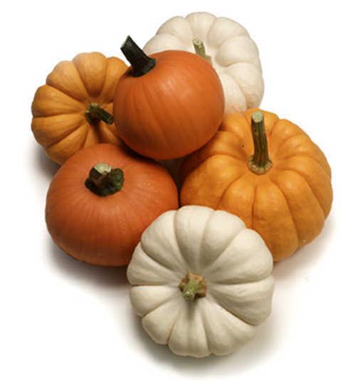 Mini_pumpkins.full