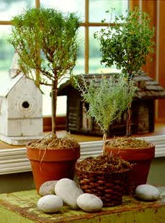 Create a mini forest on your window ledge!