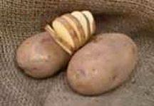 Potatoes_solanum_tuberosum_russet_norkotah-1.full