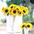 Sunflowers_helianthus_annuus_f1_sunrich_lemon_summer.small