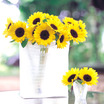 Sunflowers_helianthus_annuus_f1_sunrich_lemon_summer.thumb